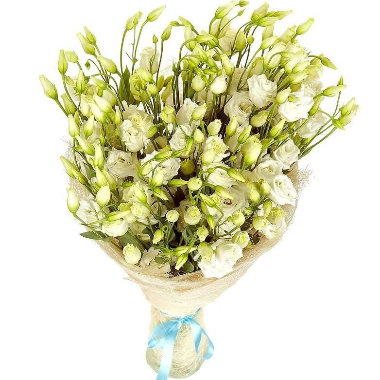 Цветы, эустома цветок букет цена
